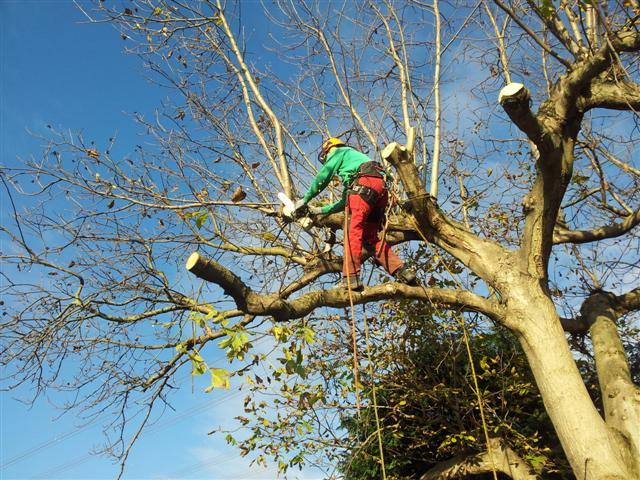 Balanceakt auf einem hohen Baum - durch Seil gesichert, Garten-Boss, Stuttgart