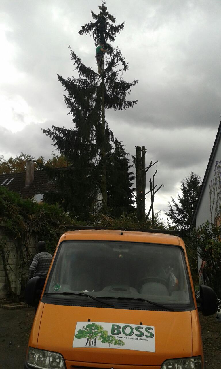 Grosse Bäume zu fällen - kein Problem für Garten-Boss, Stuttgart-Zazenhausen