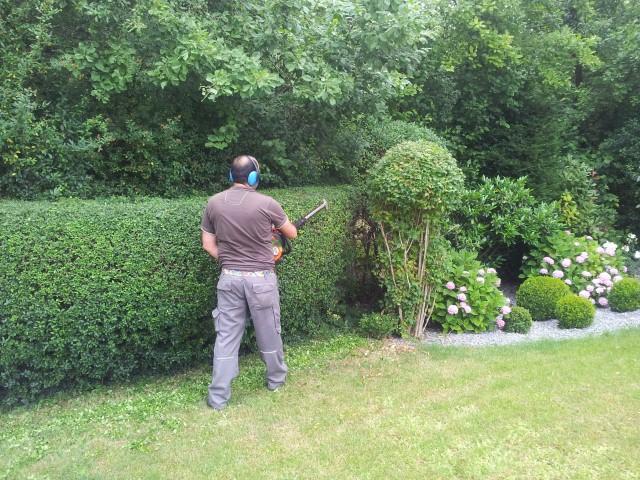 Garten-Boss beim Hecken schneiden