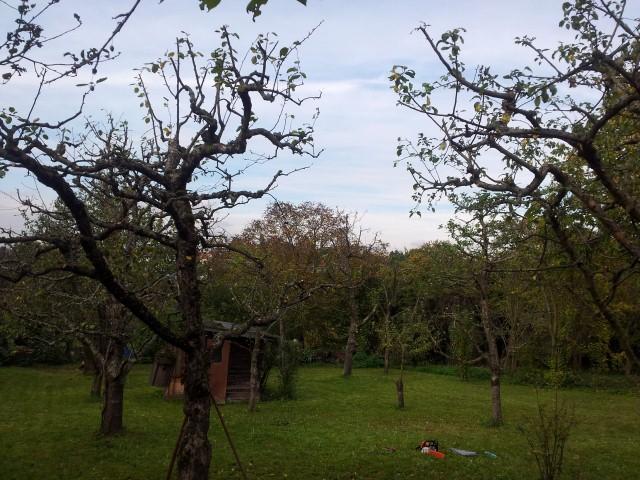 Obstbaum-Pflege durch Garten-Boss