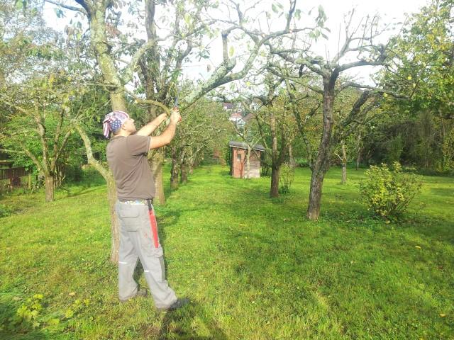 Obstbaumpflege durch Garten-Boss