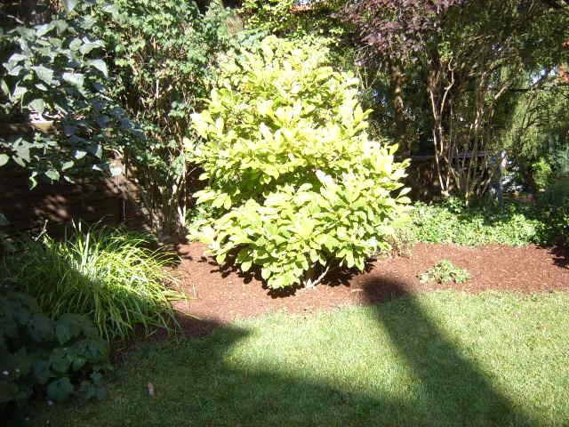 Sträucher-Pflege durch Garten-Boss